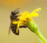 Les insectes auxiliaires utiles au jardin